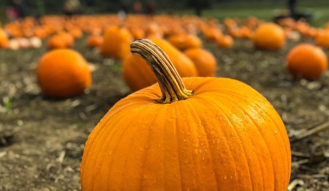 Skip the Latte, Enjoy Pumpkin the Healthy Way