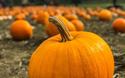 Skip the Latte, Enjoy Pumpkin the Healthy Way